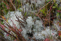 Moss, Lichen and Scenery photography 1